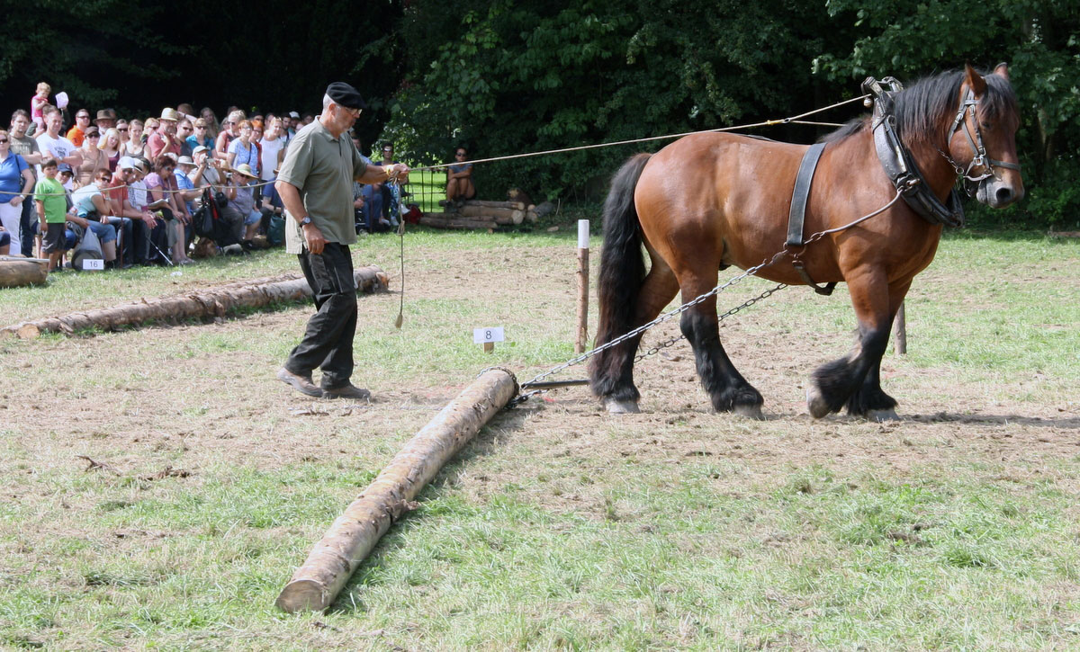Pferdestarke 2015