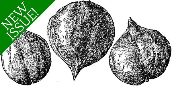 Walnuts and Butternuts