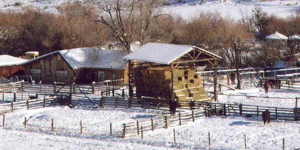 Wintering Livestock