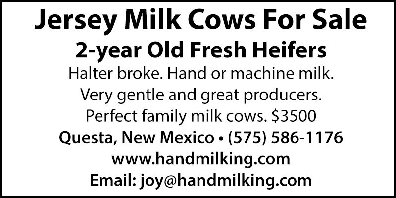 Jersey Milk Cows For Sale