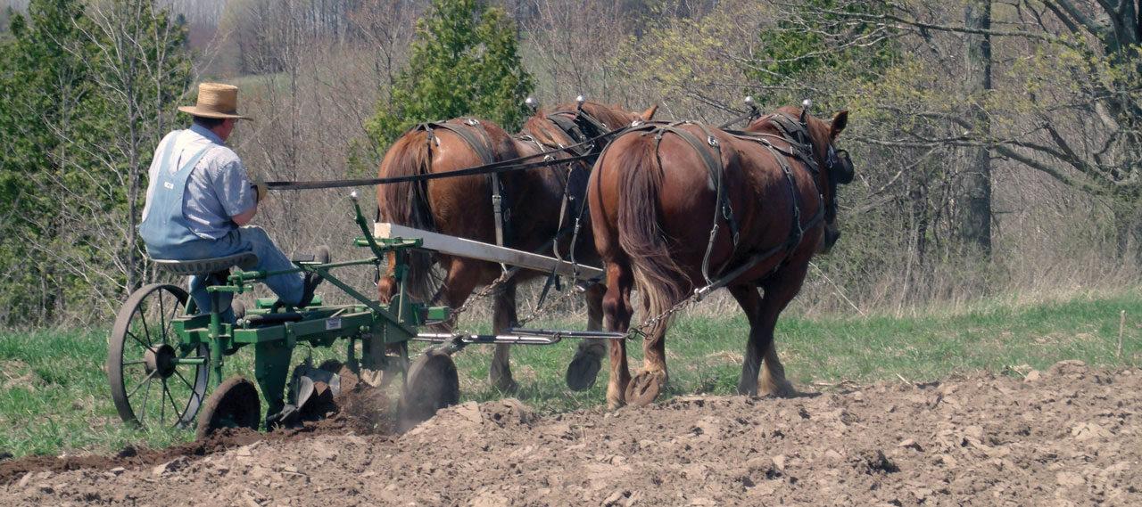 American Suffolk Horse Association