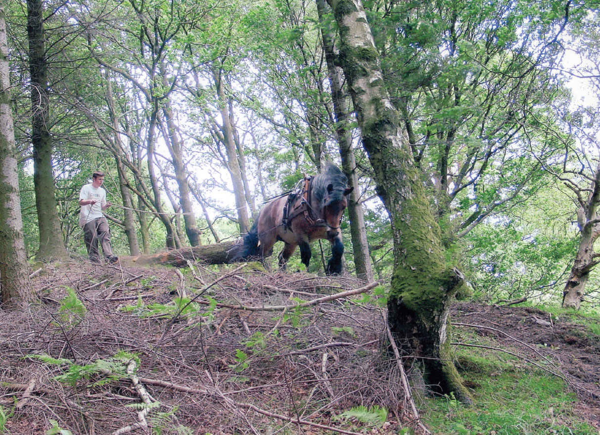 Horselogging in Yewdale