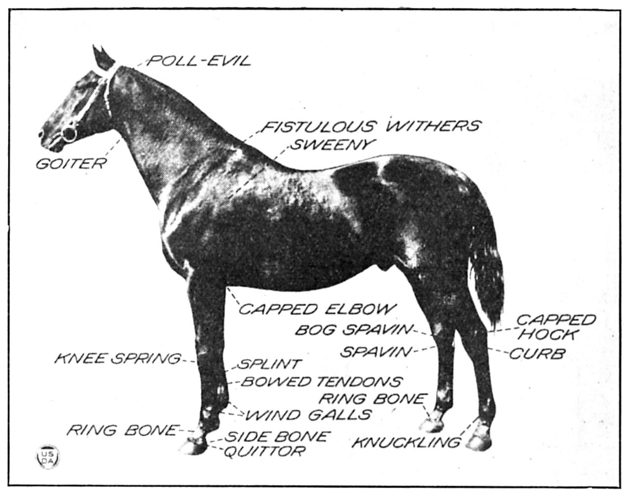 How To Select a Sound Horse