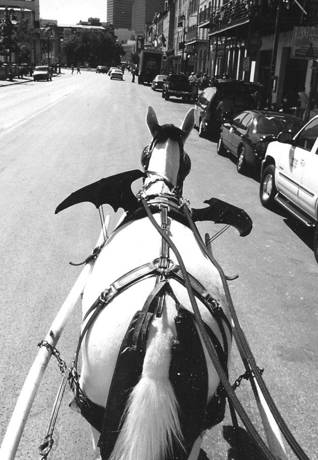 A Ride Through the Quarter