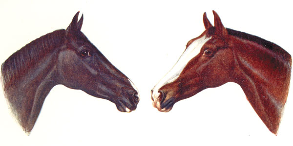 Skin Markings on Horses
