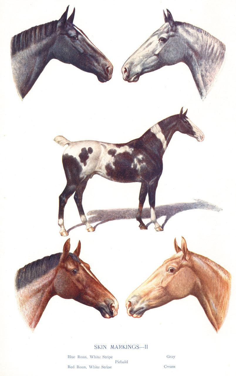 Skin Markings on Horses