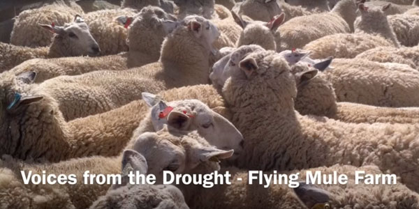 The Emotional Toll of Drought