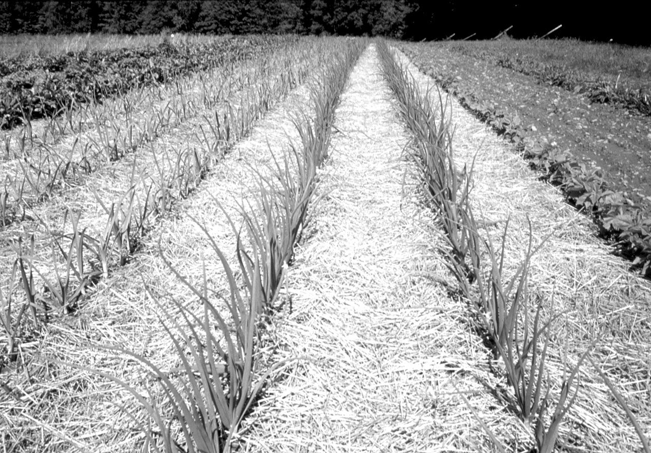 Cultivating Questions Grow Your Own Mulch