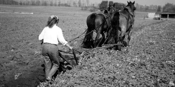 The Austrian Haflinger – Small Farmer's Journal