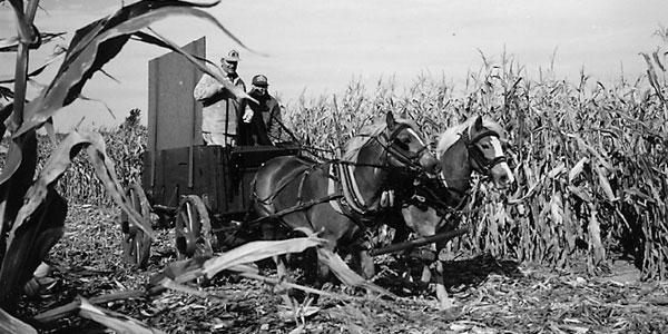 Ohio Corn Husking