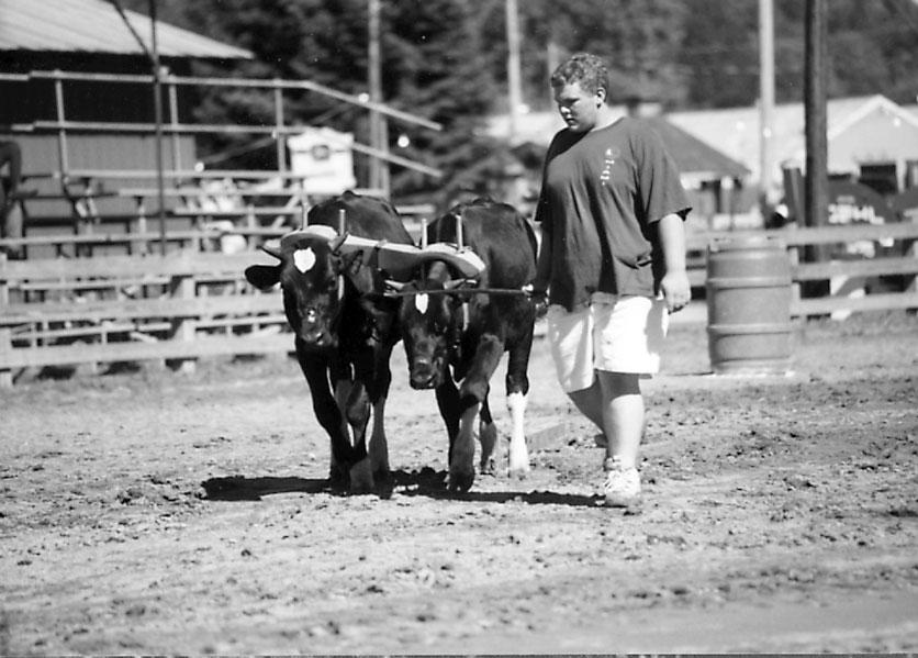 Pennsylvania Oxen Revisited