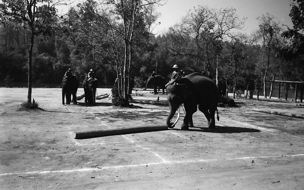 Working Elephants