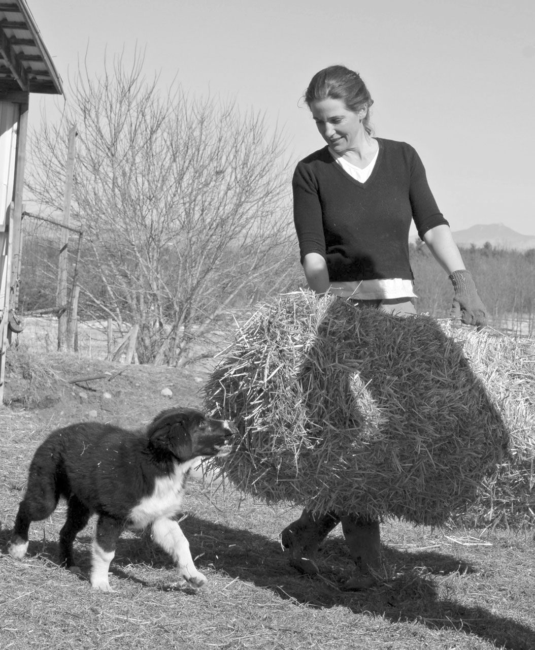 The English Shepherd and the Diversified Small Farm