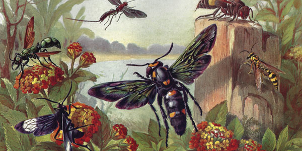 Insect Images from Brehms Animal Life 1860
