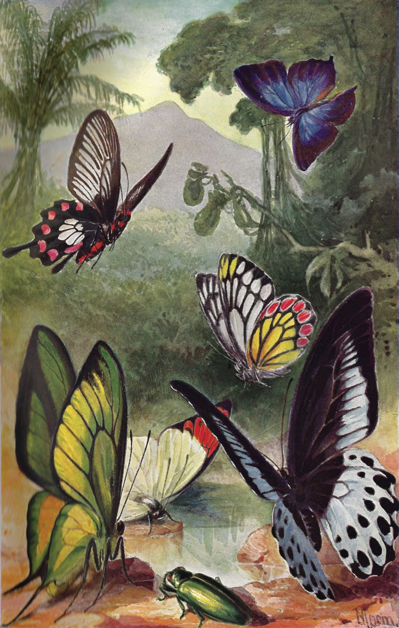 Insec Images from Brehms Animal Life 1860