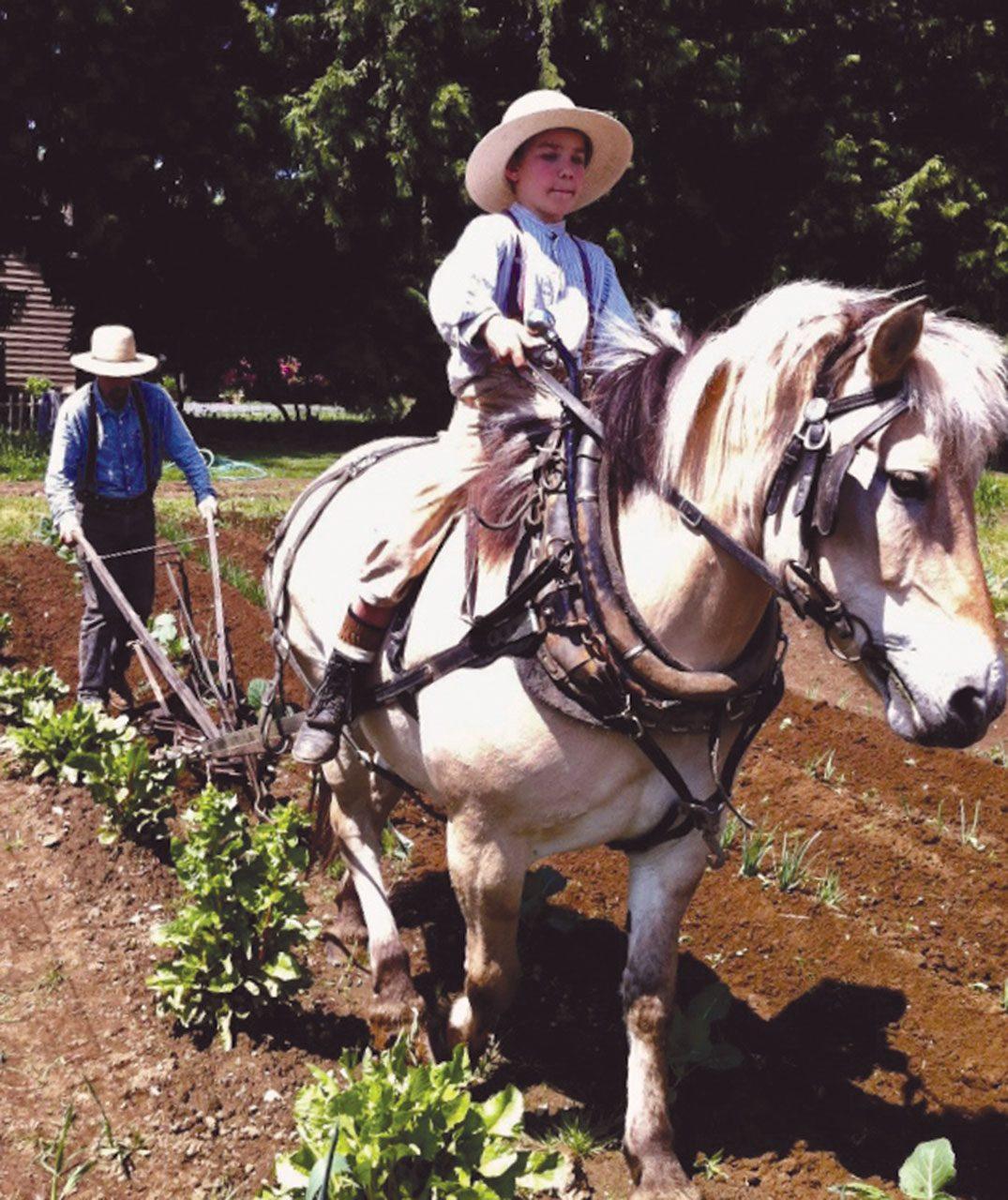 LittleField Notes Comentarium Agriculturae Miscelenea