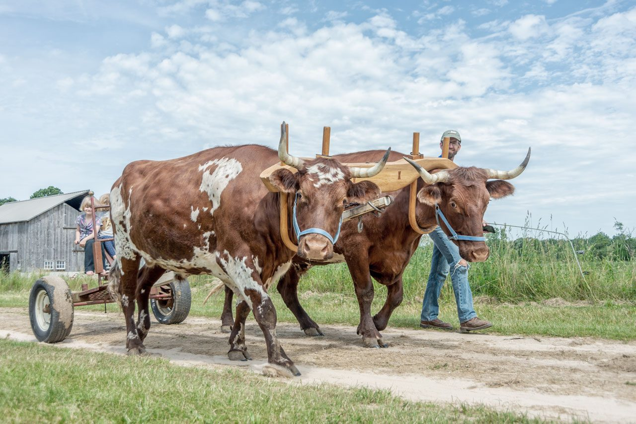 Midwest Ox Drovers Association