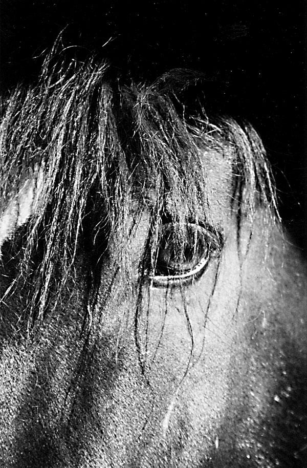 Horselogging Follies
