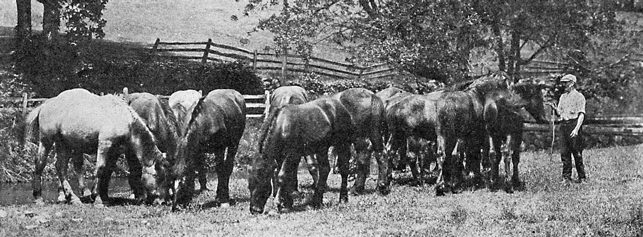 Three Percheron Mares and the Men they Made