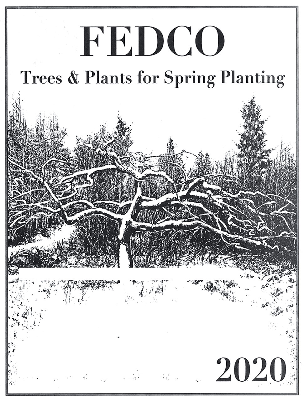 Fedco Trees and Plants for Spring Planting