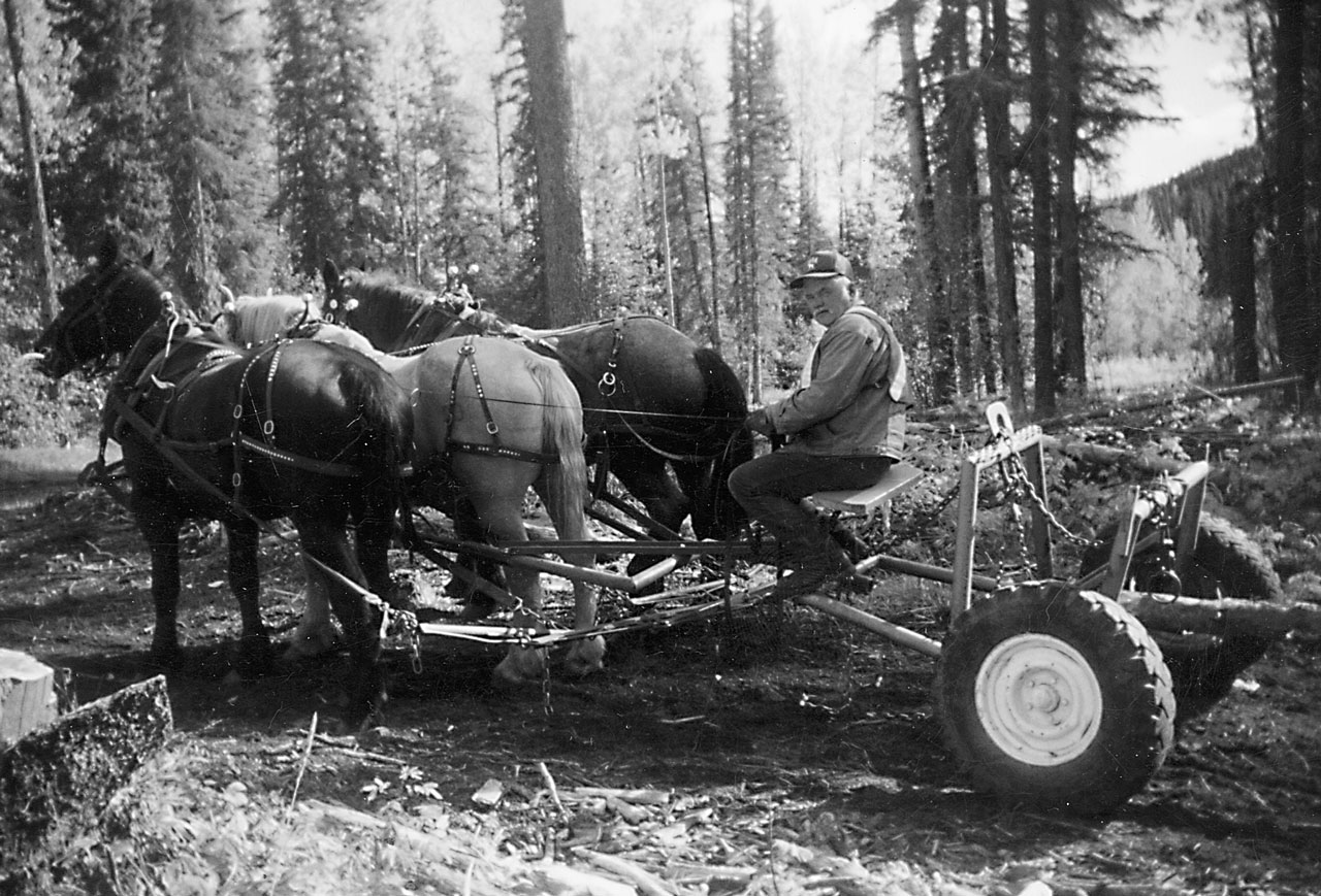 Oles Log Building and Horse Logging