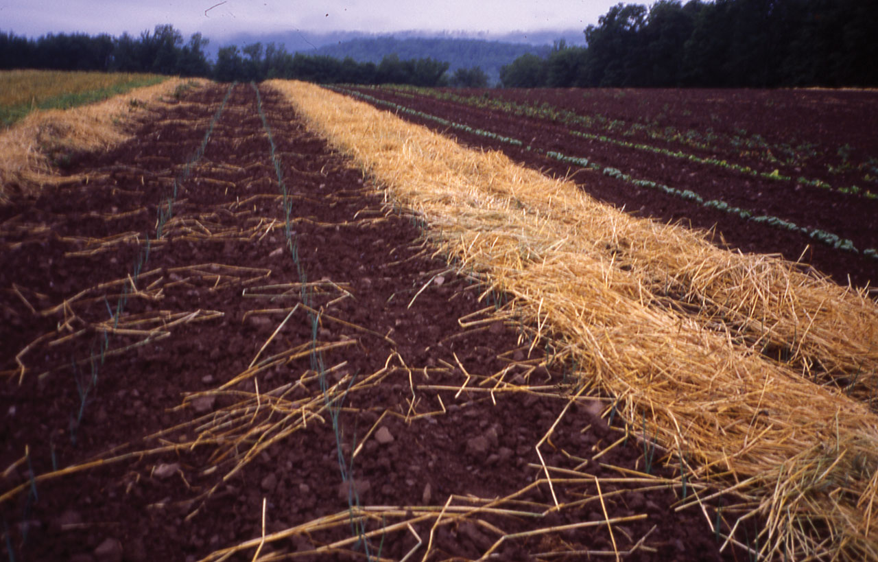 Cultivating Questions Grow Your Own Mulch Part 3