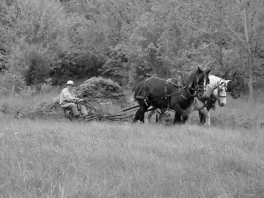 The Past in the Present A Look at Historic Farming at Carriage Hill