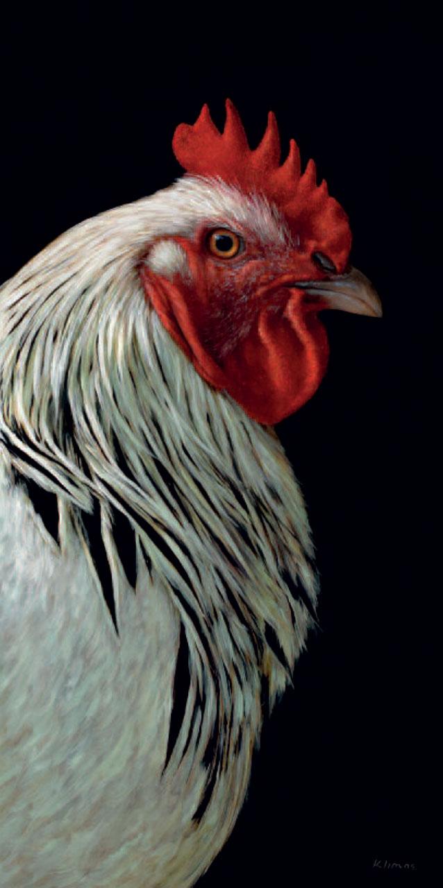 Alexandra Klimas Fine Animal Studies