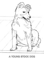 Farm Animal Coloring Book Page 11