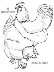 Farm Animal Coloring Book Page 12