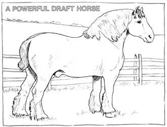Farm Animal Coloring Book Page 15
