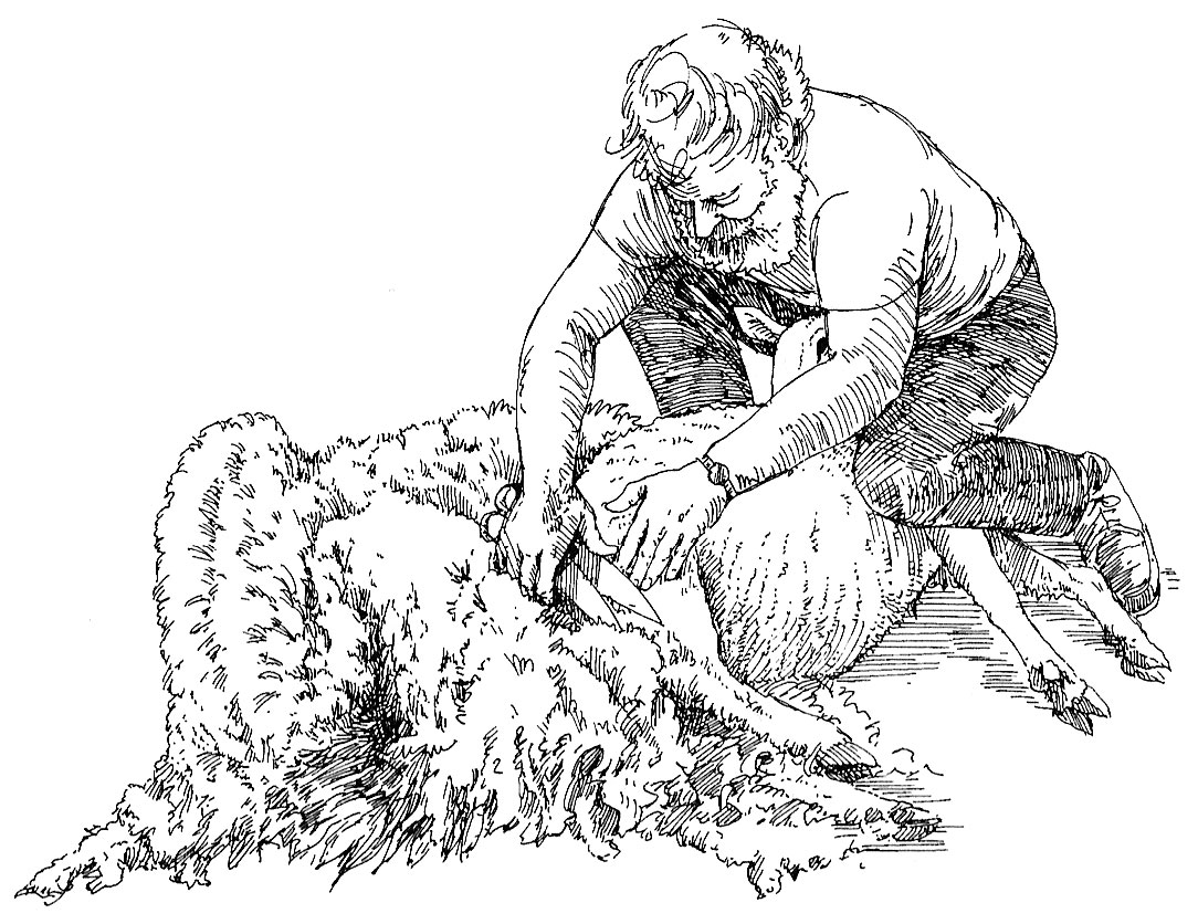 How to Shear