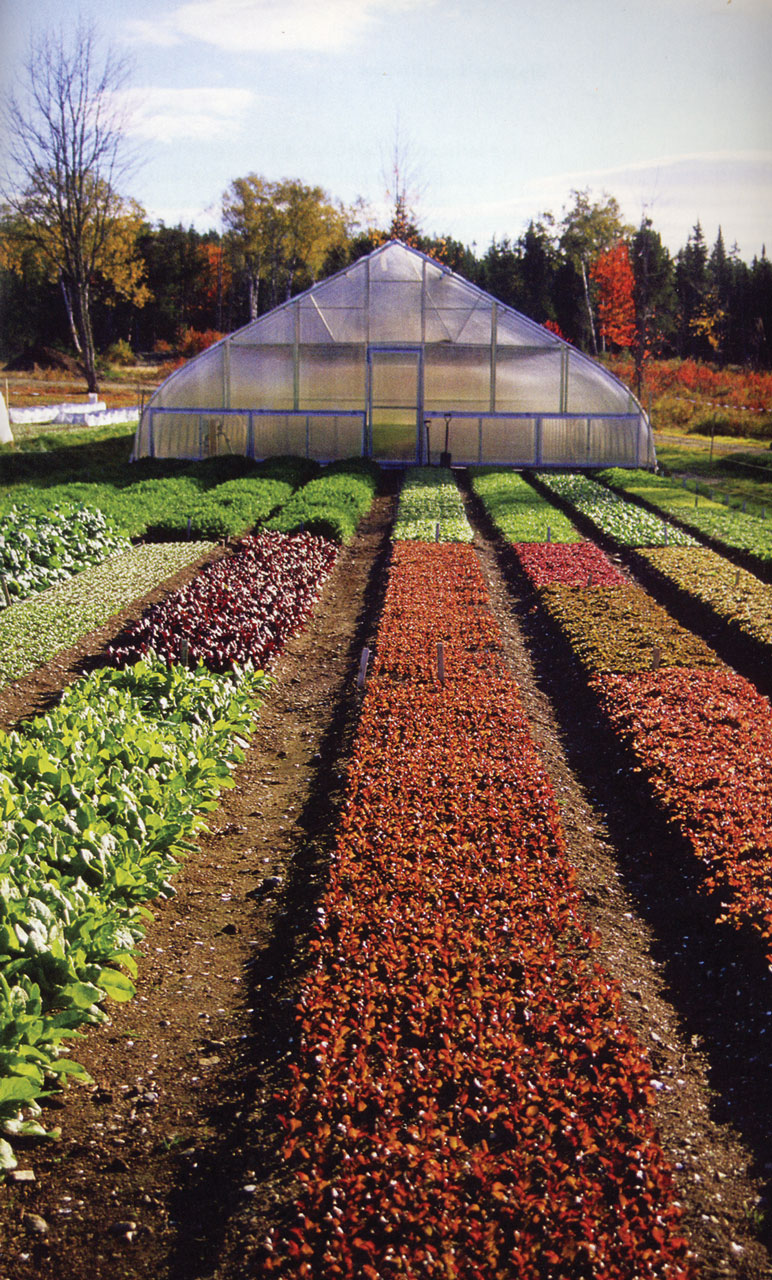 Cultivating Questions High-Value Cover Cropping