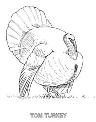 Farm Animal Coloring Book Page 21