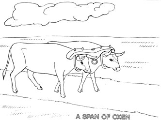 Farm Animal Coloring Book Page 23