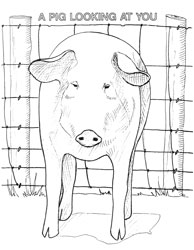 Farm Animal Coloring Book Page 25