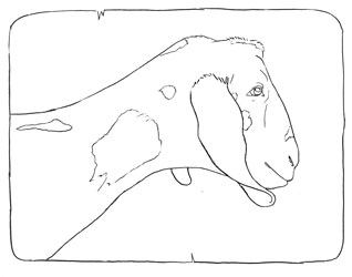 Farm Animal Coloring Book Page 27