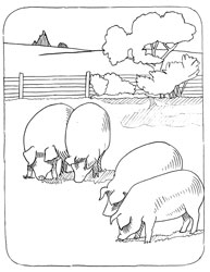Farm Animal Coloring Book Page 28