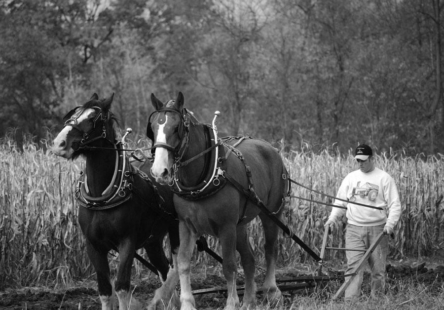 Fall Harvest Days at the Triple H Farm