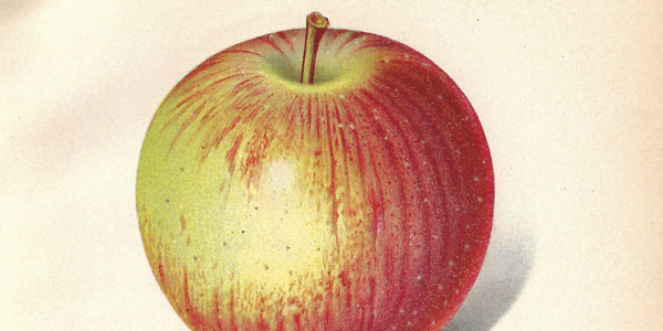 Color as an Indication of the Picking Maturity of Fruits and Vegetables