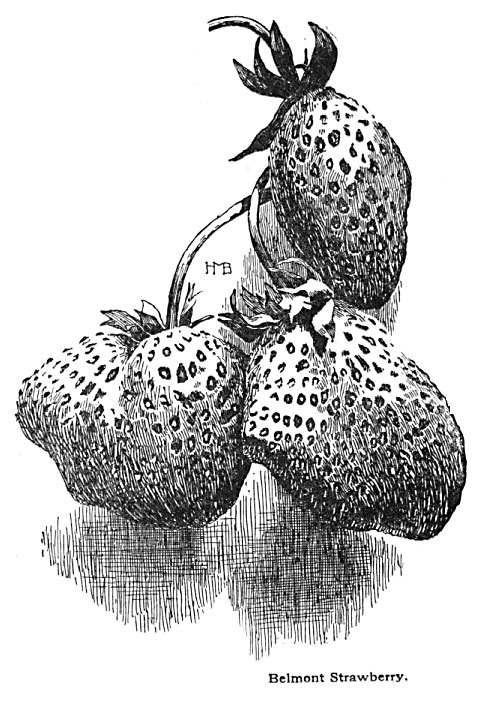 Growing Strawberries for Home Use