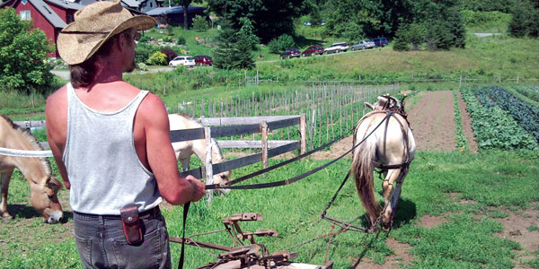 Fjordworks Cultivating the Market Garden with a Single Horse