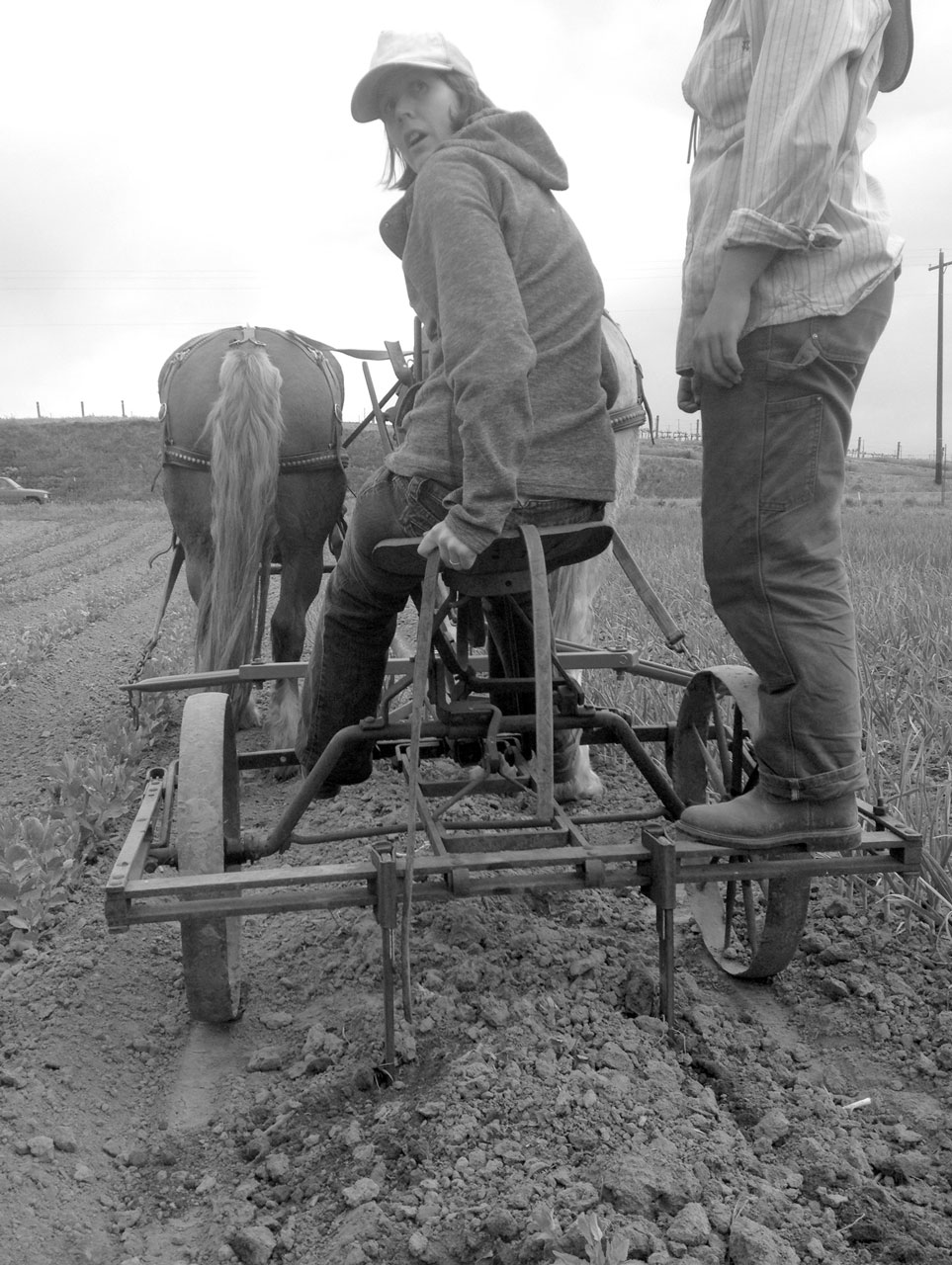 Between Ourselves and Our Land Horsepowered Root Digger