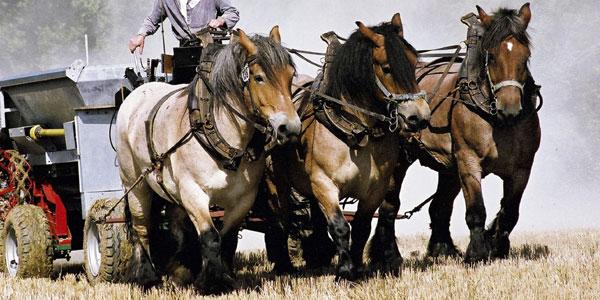 Pferdestarke 2007
