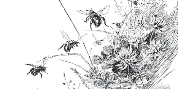 O Where O Where have the Honeybees Gone