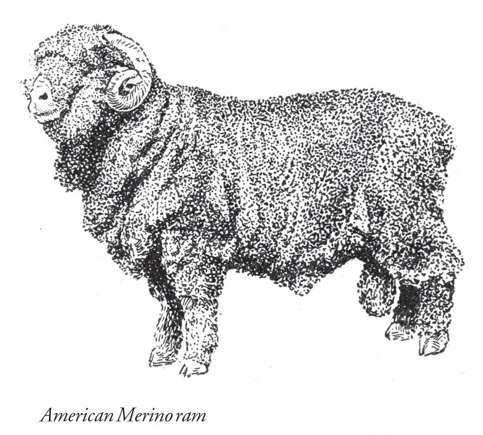 Farm Sheep Raising for Beginners