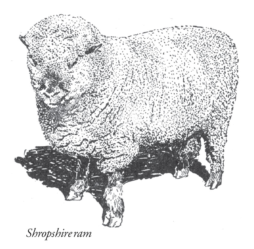 Farm Sheep Raising for BeginnersFarm Sheep Raising for Beginners