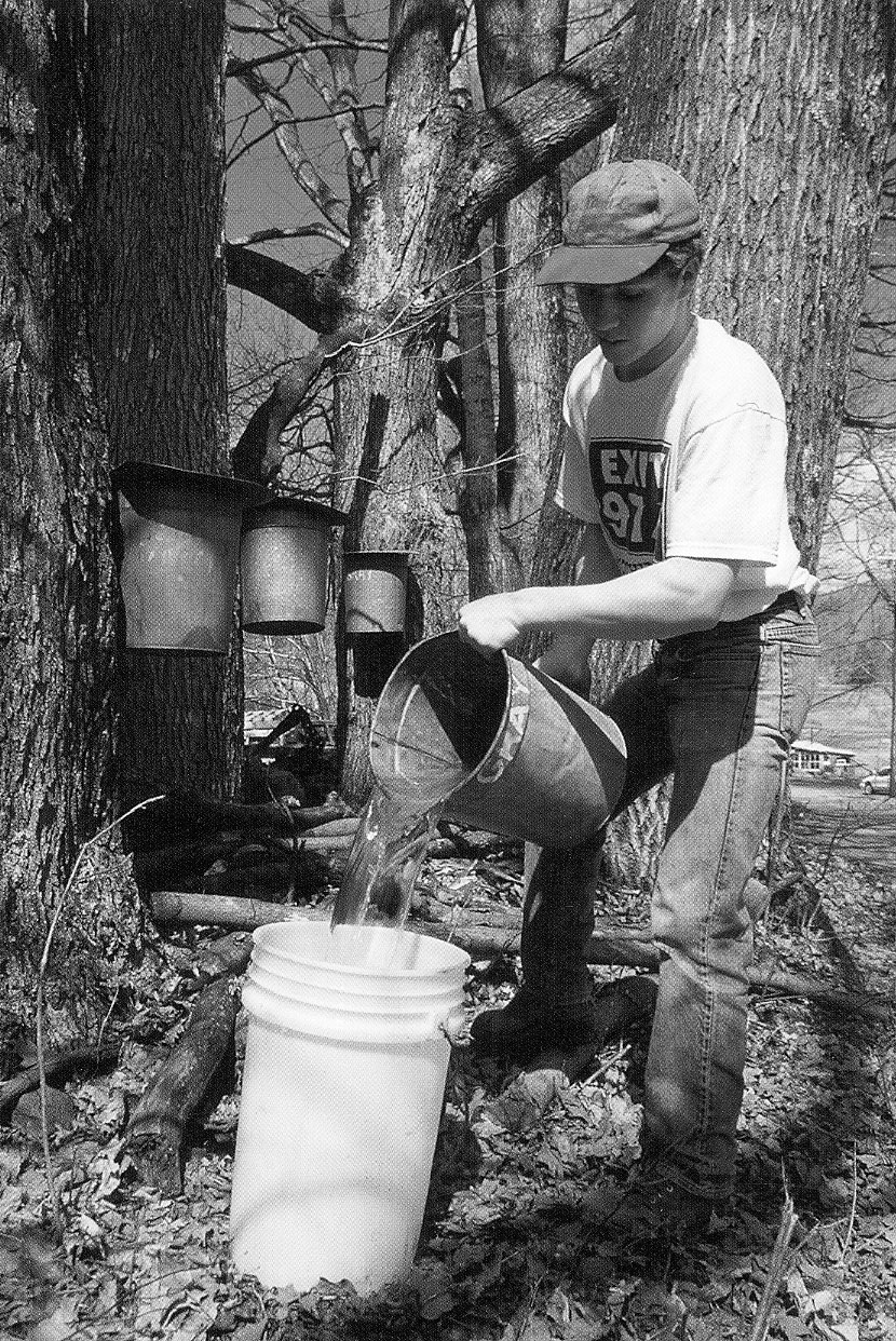 How Do You Know Its Spring Maple Syrup