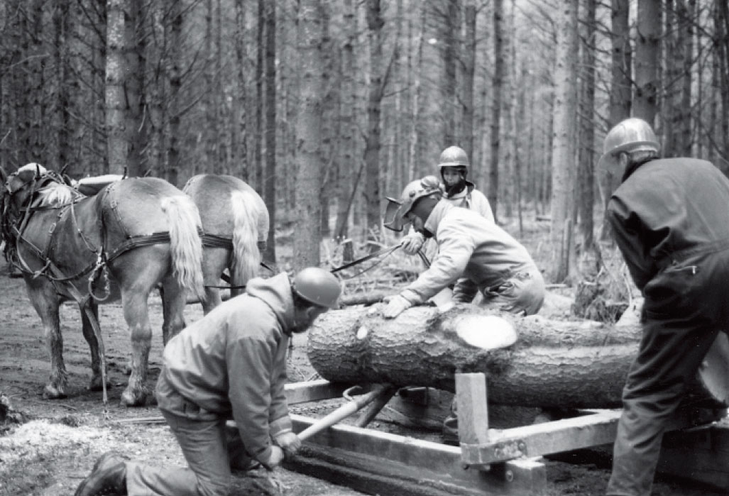 Low-Impact Forestry Workshop 2003