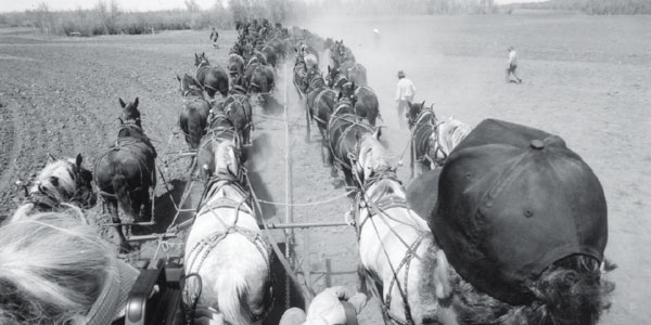 World Record Percheron Draft Horse Hitch